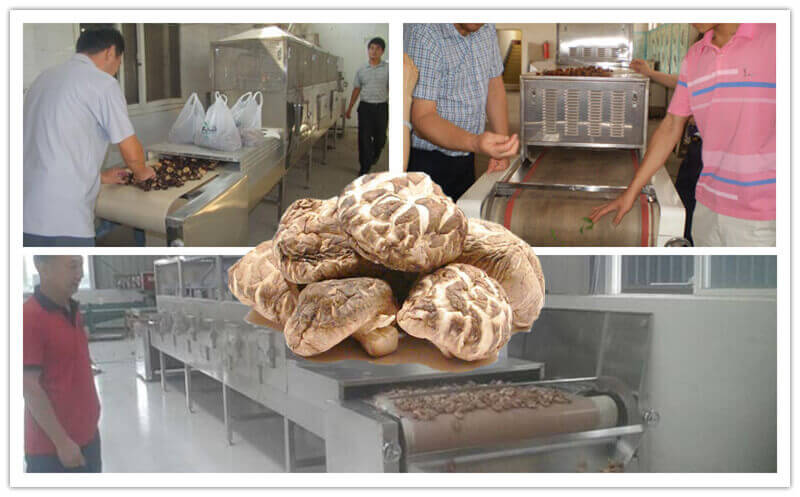 how to dry shiitake by microwave mushroom dryer machine