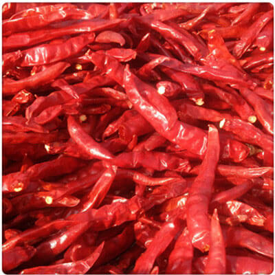 How to Dry Chilies by Hot Air Circulation Oven